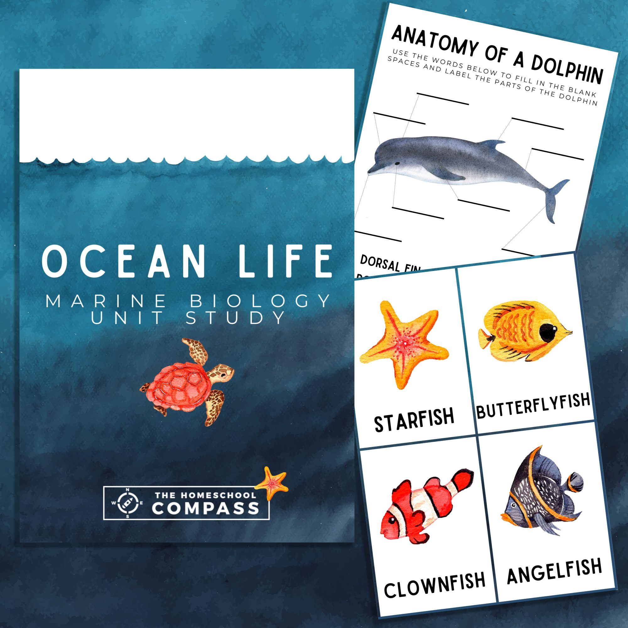 hight resolution of Free Ocean Life Marine Biology Printable Pack - Homeschool Compass