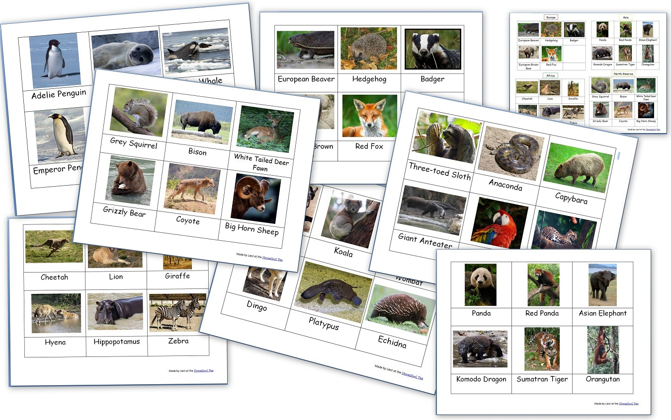 World Animal Packet 60 Pages