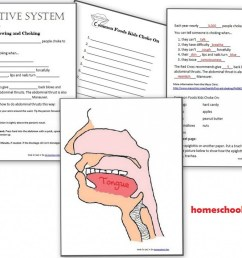 Digestive System Hands-On Activities - Esophagus [ 773 x 1024 Pixel ]
