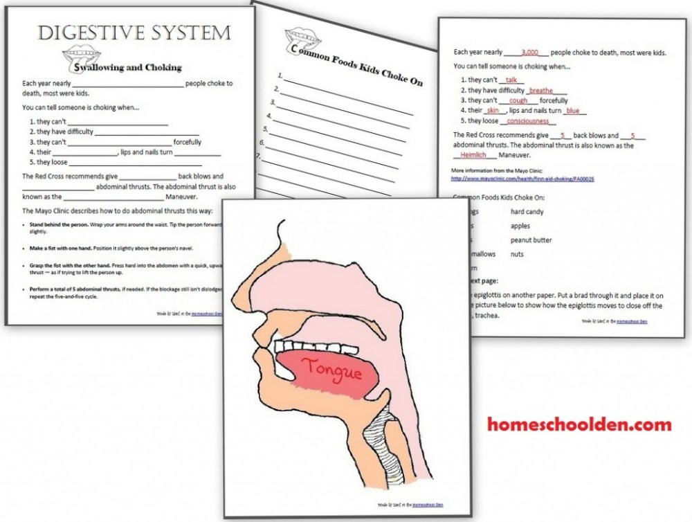 medium resolution of digestive system worksheets epiglottis swallowing