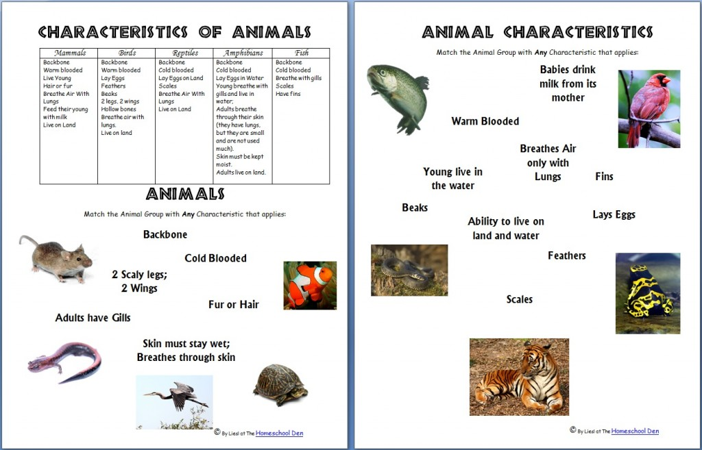 Animals and Their Characteristics (Free Worksheet