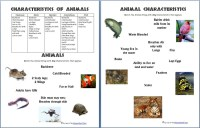 Animals and Their Characteristics (Free Worksheet ...