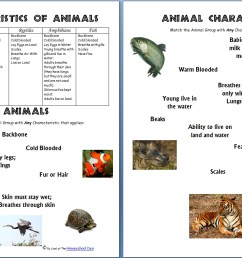 Animals and Their Characteristics (Free Worksheet) - Homeschool Den [ 854 x 1332 Pixel ]