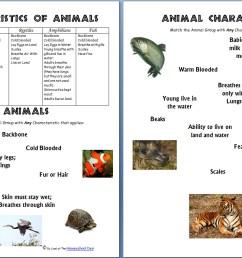 Animals and Their Characteristics (Free Worksheet) - Homeschool Den [ 854 x 1332 Pixel ]