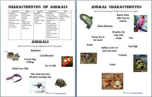 small resolution of Animals and Their Characteristics (Free Worksheet) - Homeschool Den