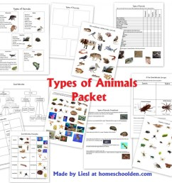 types of animals worksheets [ 1024 x 949 Pixel ]