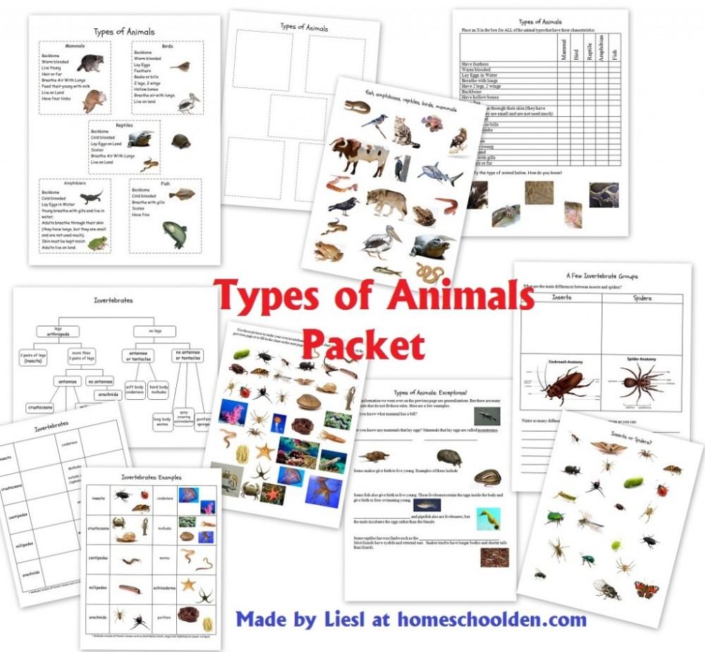 medium resolution of types of animals worksheets