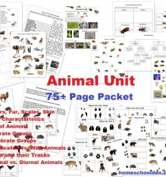 Animal Unit: Vertebrate-Invertebrate Animals Worksheet Packet (100+ Pages)  - Homeschool Den [ 819 x 1024 Pixel ]
