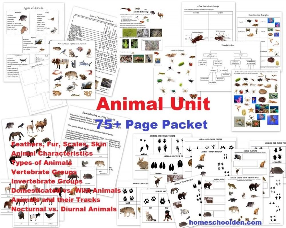 medium resolution of Animal Unit: Vertebrate-Invertebrate Animals Worksheet Packet (100+ Pages)  - Homeschool Den