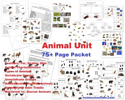 small resolution of Animal Unit: Vertebrate-Invertebrate Animals Worksheet Packet (100+ Pages)  - Homeschool Den