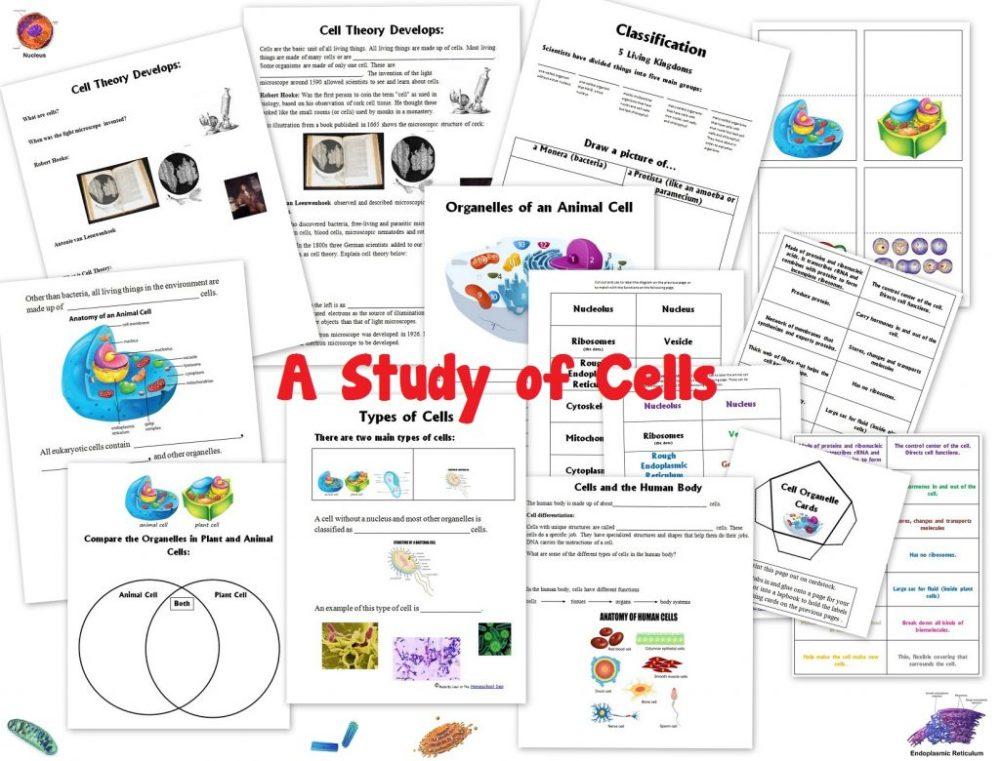 medium resolution of Nervous System Worksheets - Homeschool Den