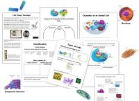 Cell Unit: Cell Organelles and their Function, Animal vs ...
