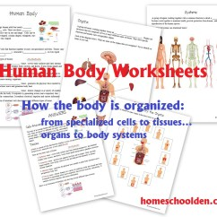 Plant Stem Diagram Worksheet 1995 Mustang Alternator Wiring Human Body Worksheets: Cells, Tissues, Organs, And The Systems - Homeschool Den