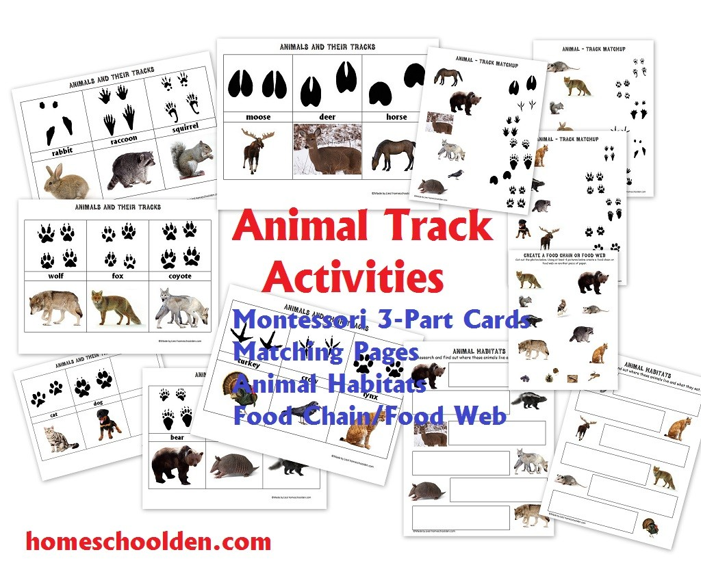 Animals And Their Characteristics Free Worksheet