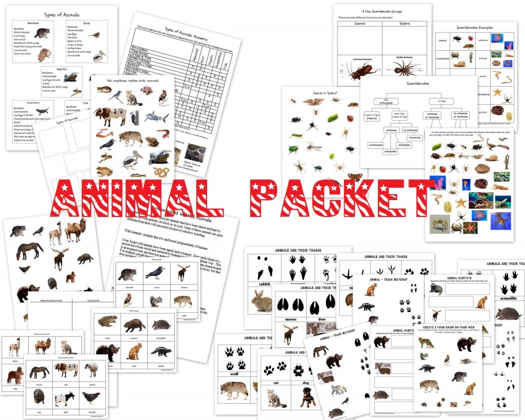 Animal Unit Vertebrate Invertebrate Animals Worksheet