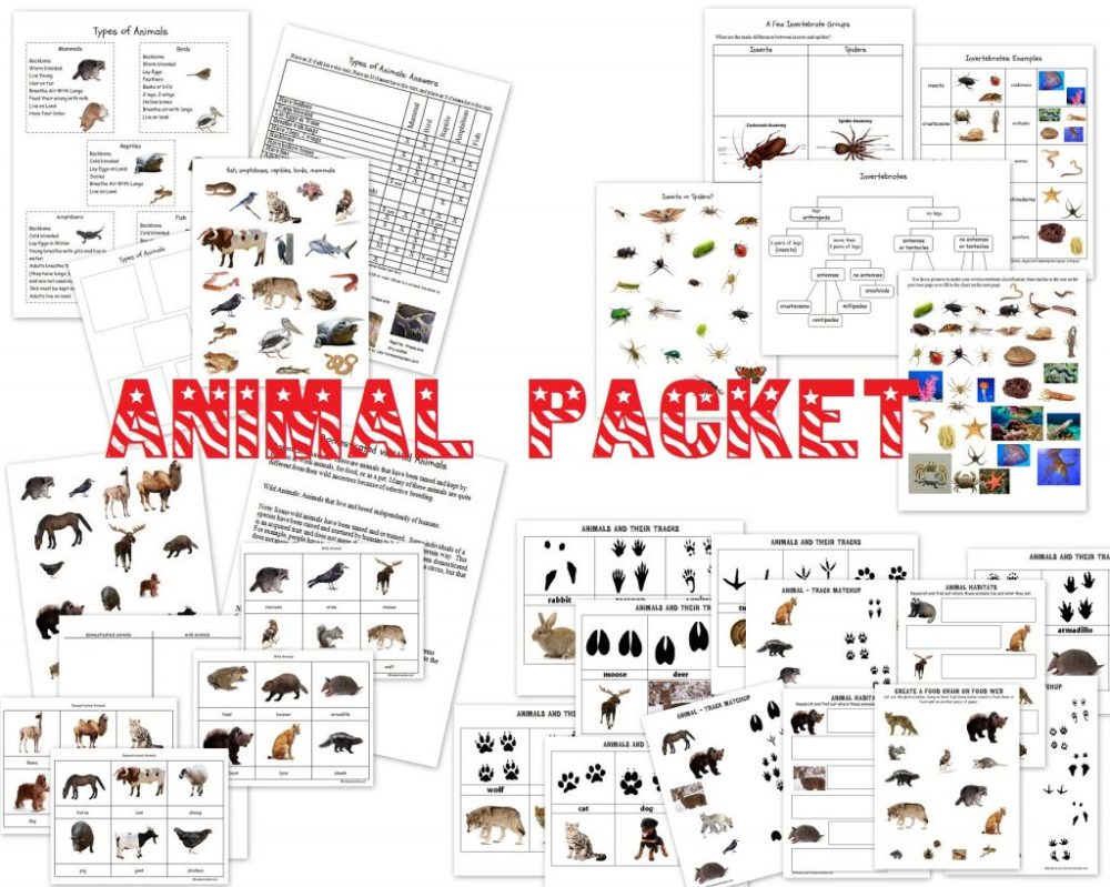 medium resolution of Animals and Their Groups Sorting Cards (ages 5-8) - Homeschool Den