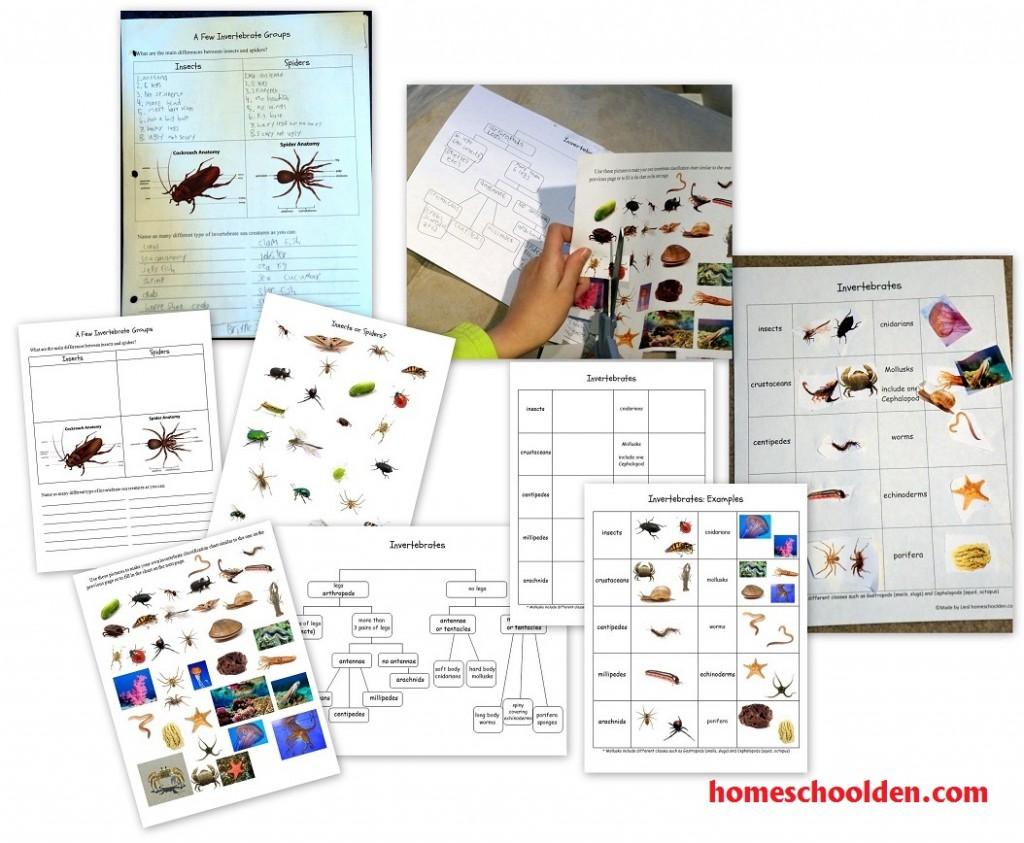 Invertebrate Vertebrate Unit Study