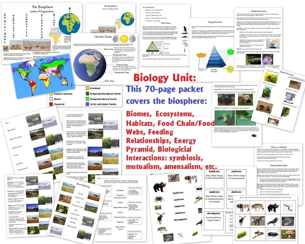 hight resolution of World Biomes Pin Map - Homeschool Den