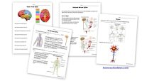 Science: Human Body Unit - Homeschool Den