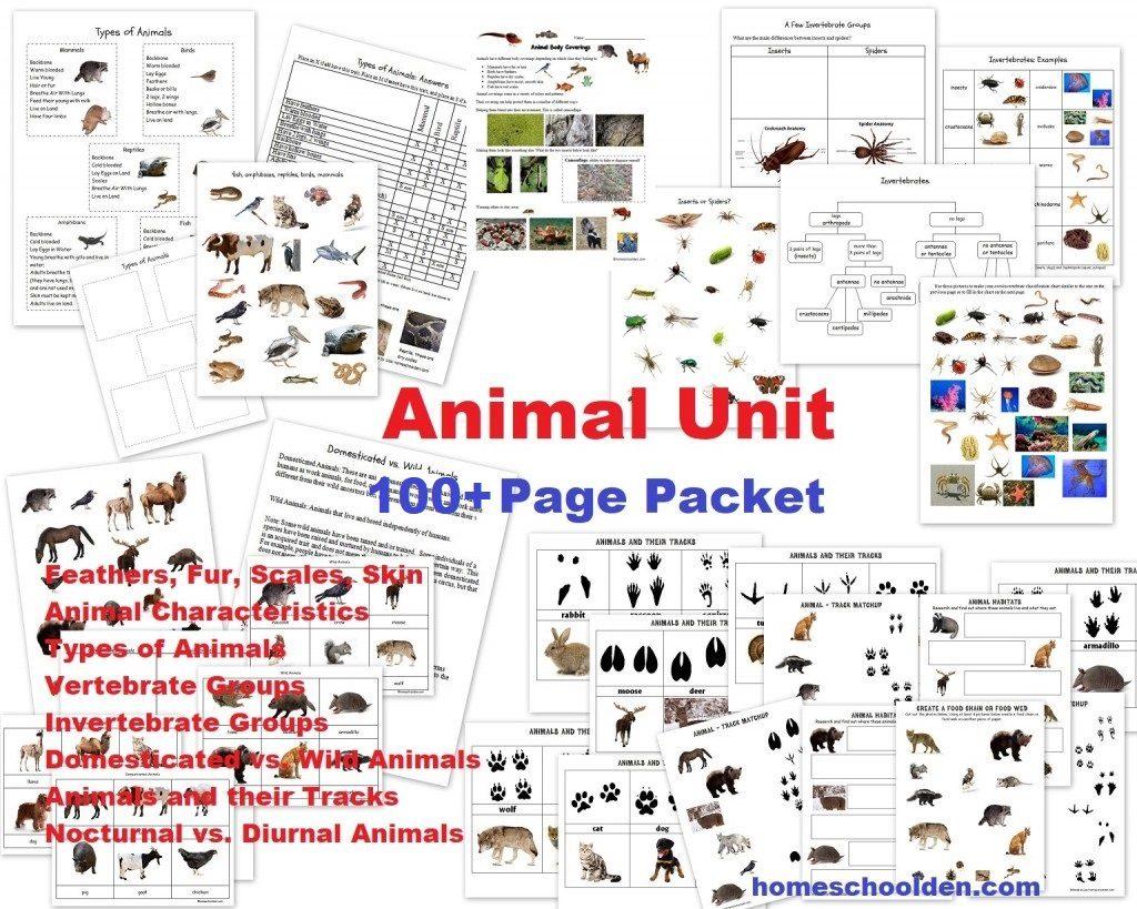 Animal Unit Vertebrate Invertebrate Animals Worksheet Packet 100 Pages