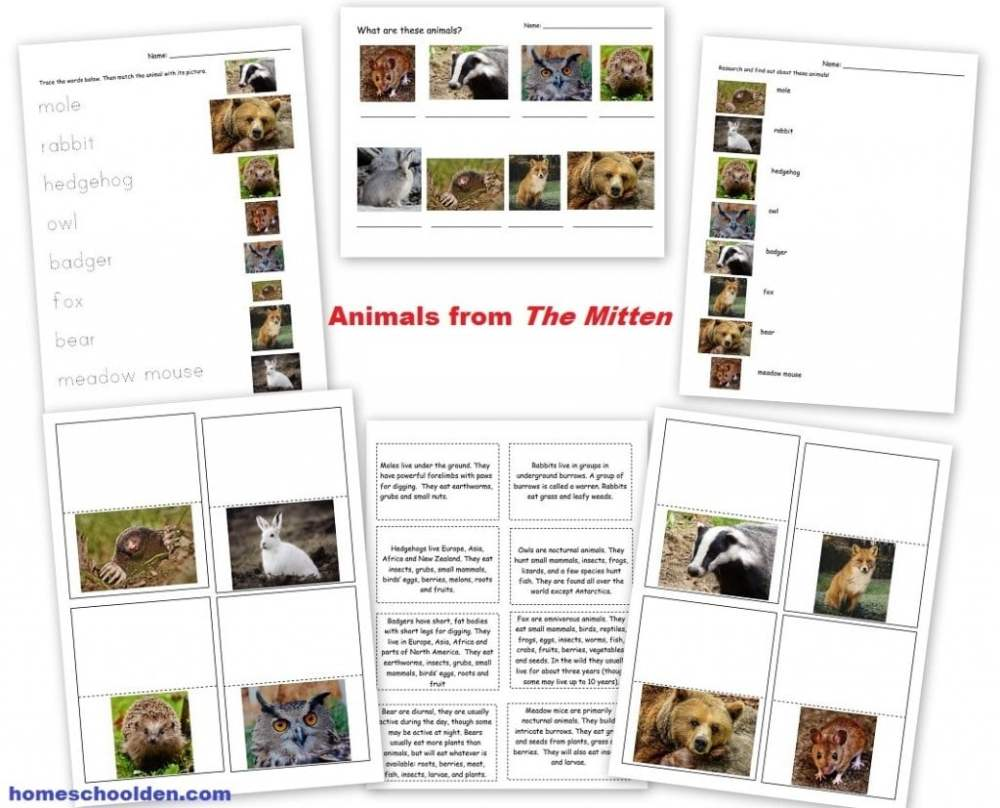 medium resolution of Animals and Their Characteristics (Free Worksheet) - Homeschool Den