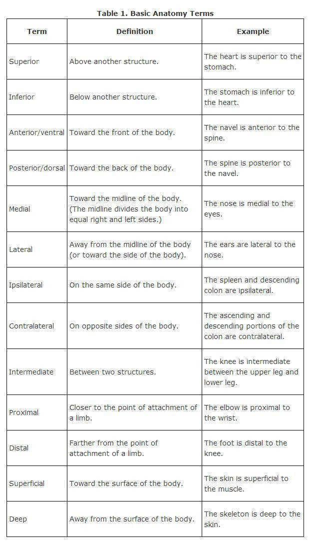 Body Planes Worksheet Answers