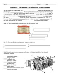 Cell Membrane And Transport Worksheet Choice Image