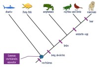 Cladogram Worksheet Answers | Homeschooldressage.com