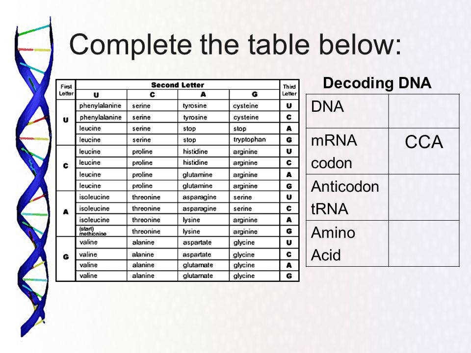 28 Decoding Mrna Worksheet Answers