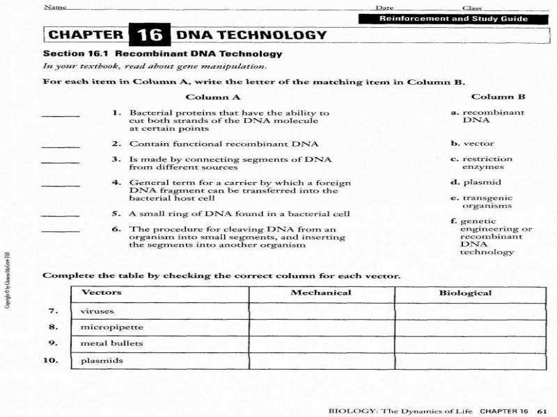 Dna Fingerprinting Worksheet