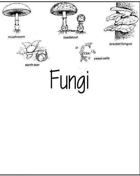 Fungi Worksheet Coloring Pages