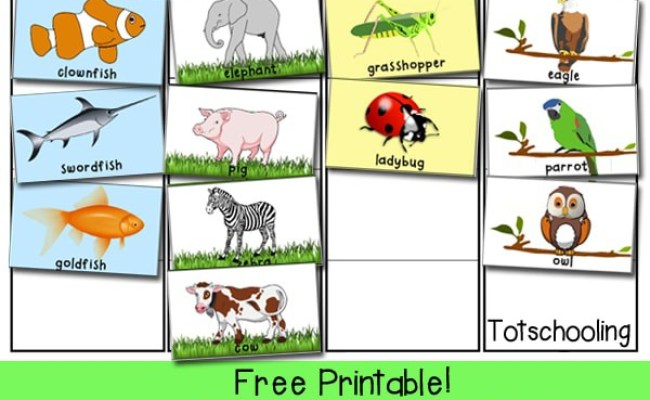 Free Animal Classification And Sorting Activity