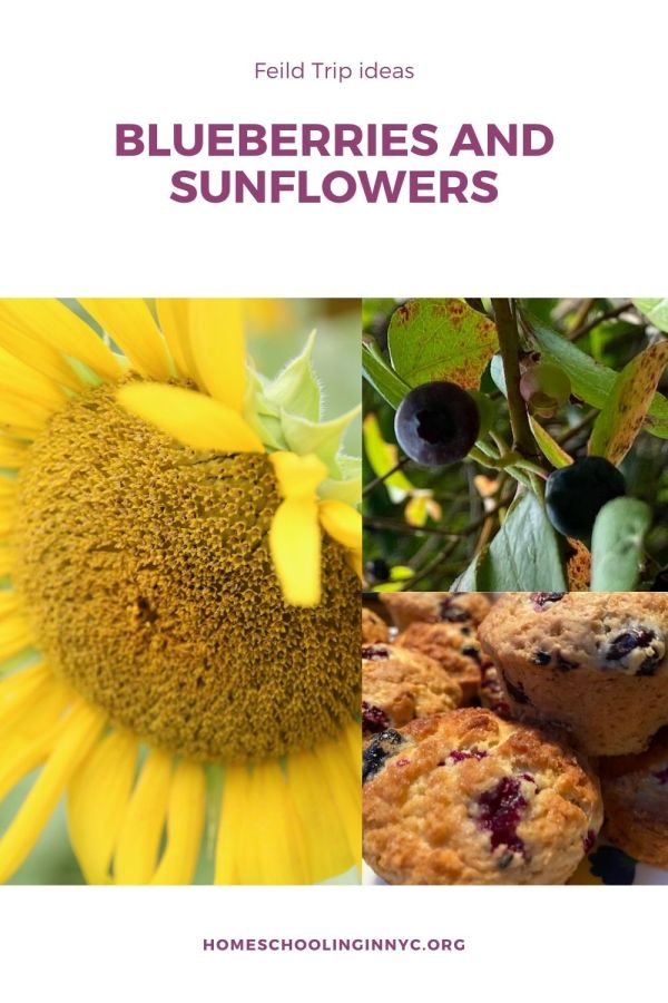 Blueberries and Sunflowers