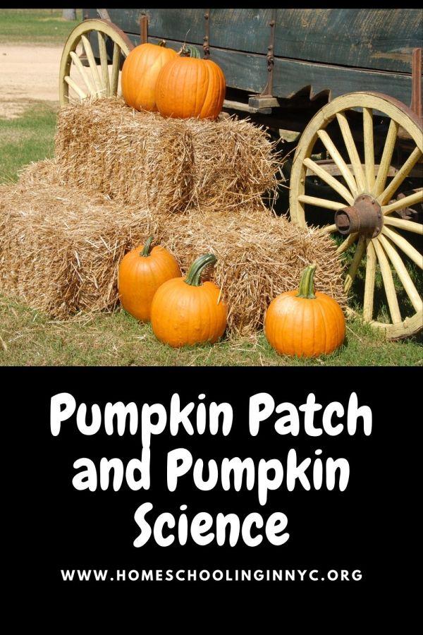 Pumpkin Picking and Pumpkin Science