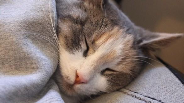 Ellie the Cat