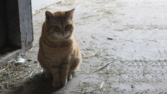 Marmalade the Cat