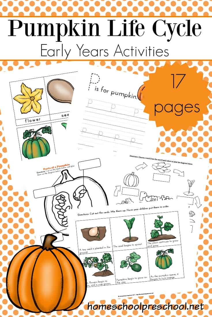 medium resolution of it s the perfect time of year to focus on pumpkins teach autumn life cycles with