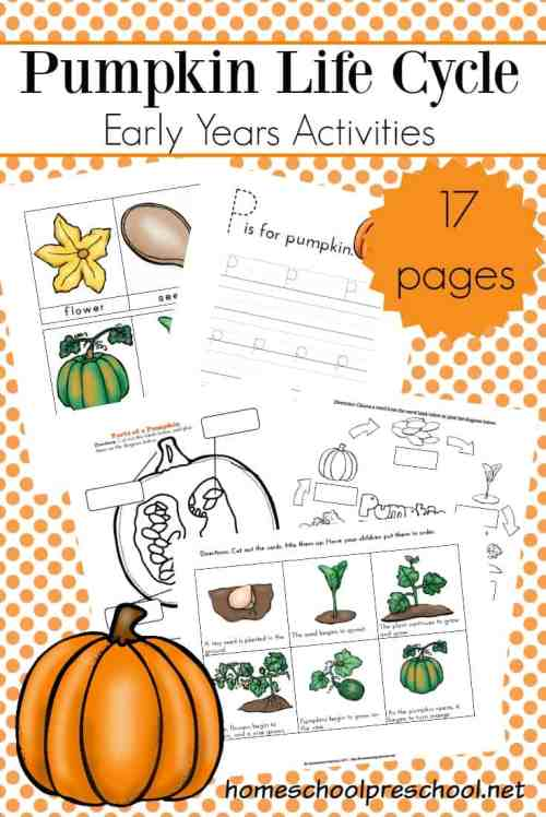 small resolution of it s the perfect time of year to focus on pumpkins teach autumn life cycles with