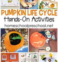 these activities these pumpkin life cycle preschool crafts and activities will engage your young learners with more than [ 735 x 1100 Pixel ]