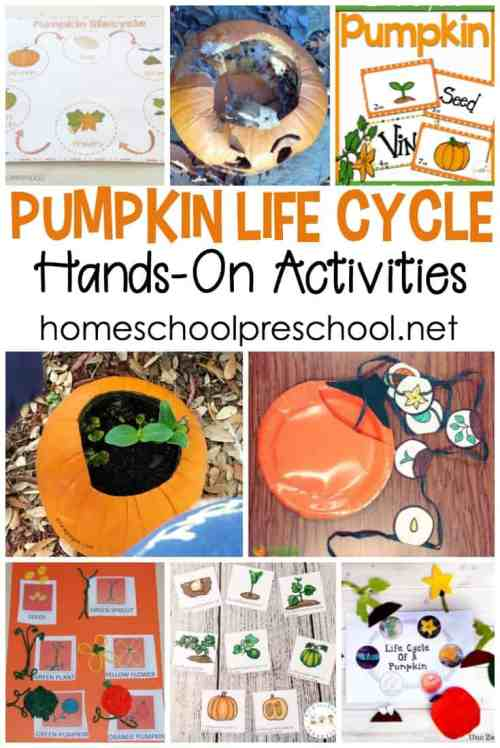 small resolution of these activities these pumpkin life cycle preschool crafts and activities will engage your young learners with more than