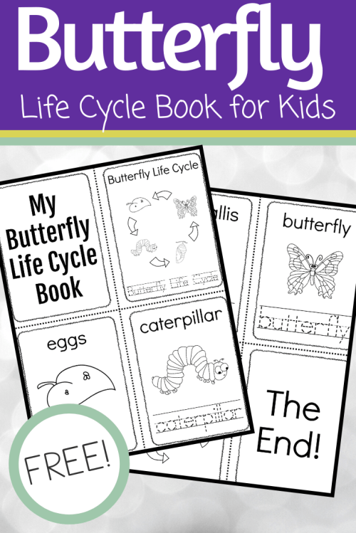 small resolution of Simple Butterfly Life Cycle Printable Book for Preschoolers