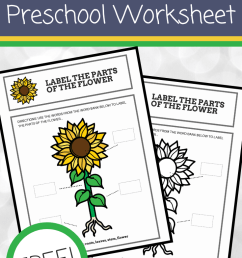 Free Printable Parts of a Flower Preschool Worksheet [ 1102 x 735 Pixel ]
