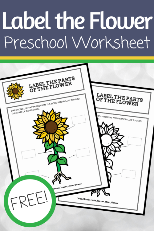 small resolution of Free Printable Parts of a Flower Preschool Worksheet