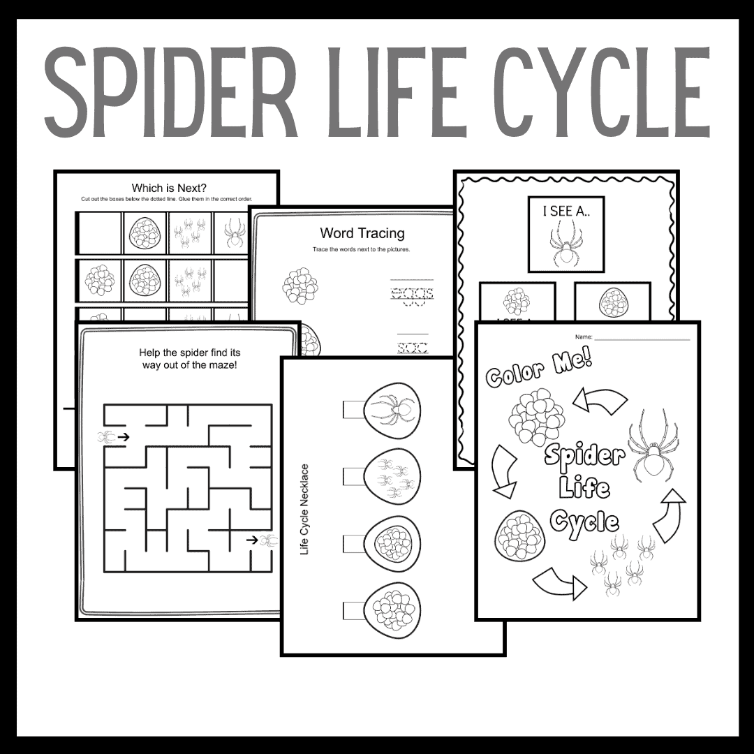 Printable Spider Life Cycle for Kids