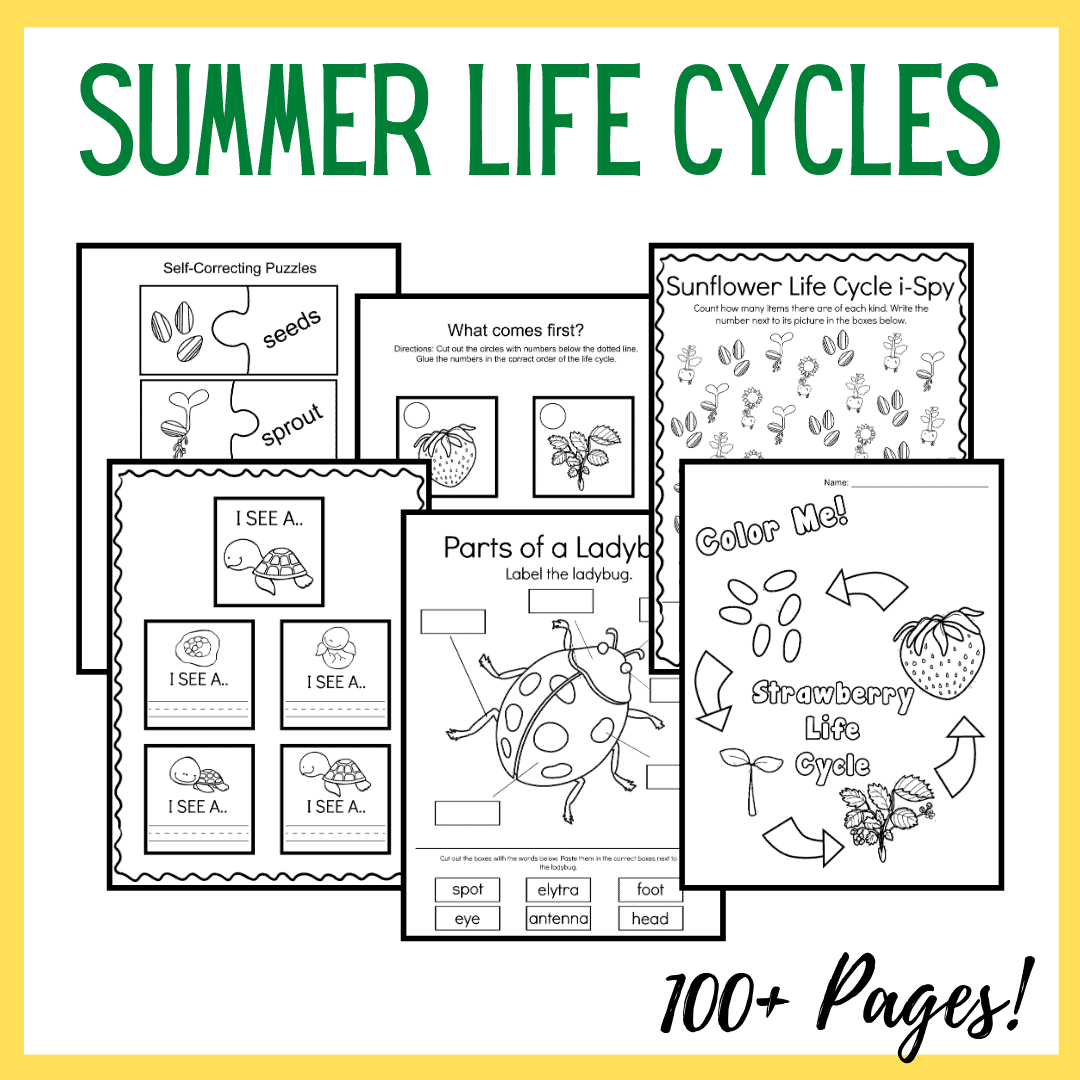 Summer Life Cycle Worksheets For Preschool