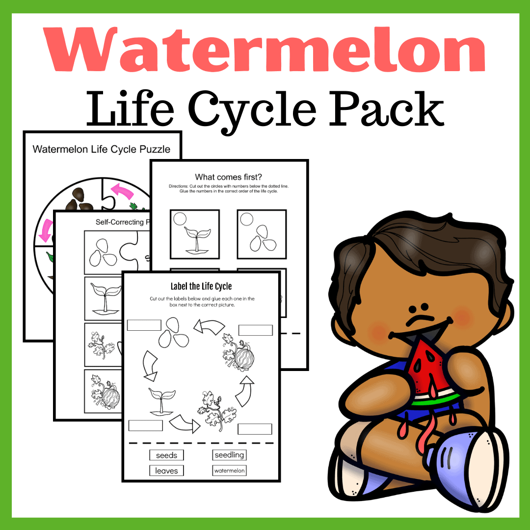 Life Cycle Of A Watermelon Worksheets For Preschool