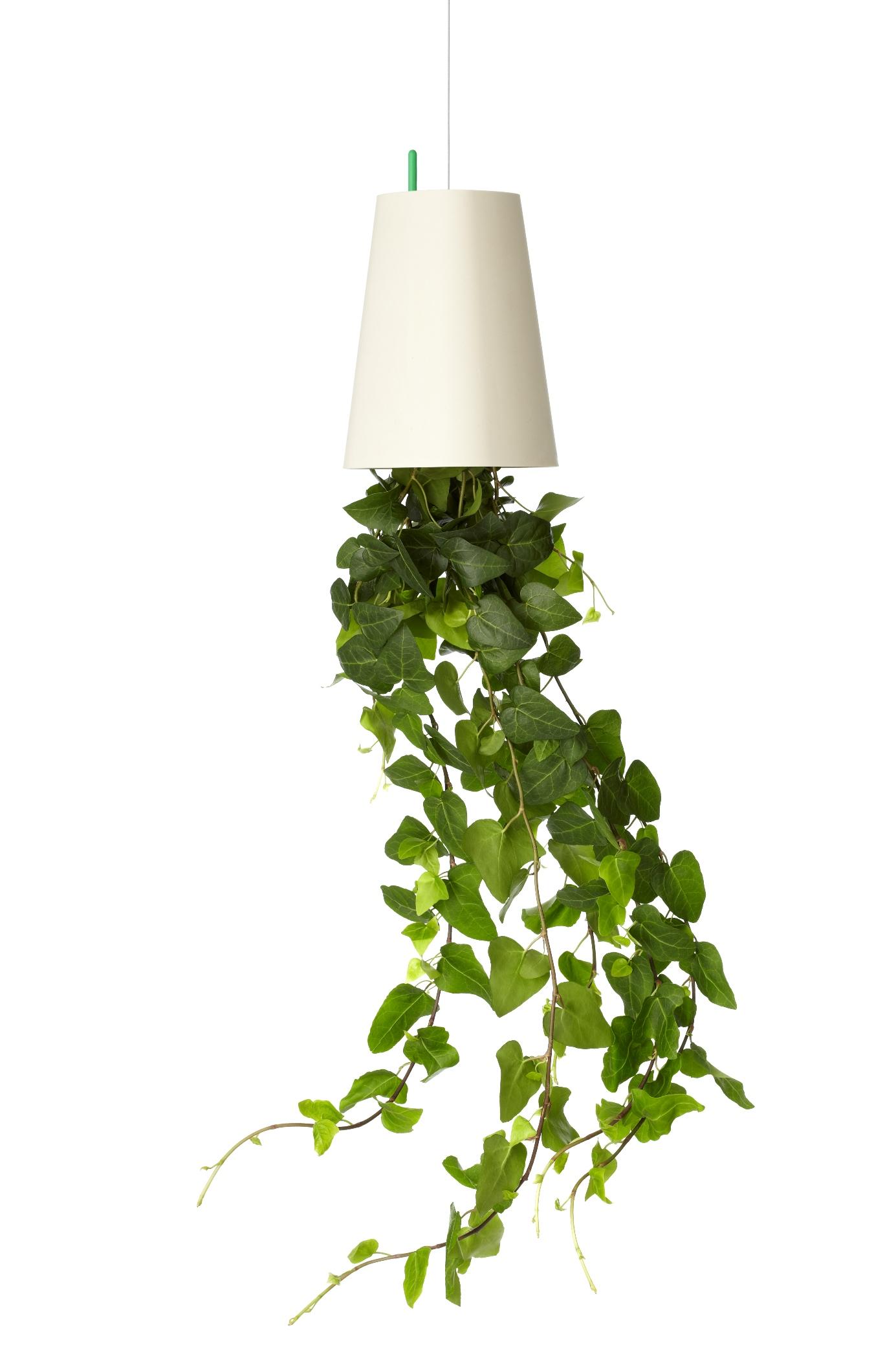 House Plants Hang Down
