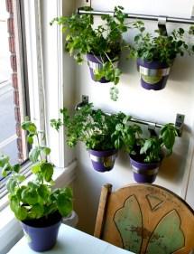 Fresh Kitchen Herbs Grow Homesfeed