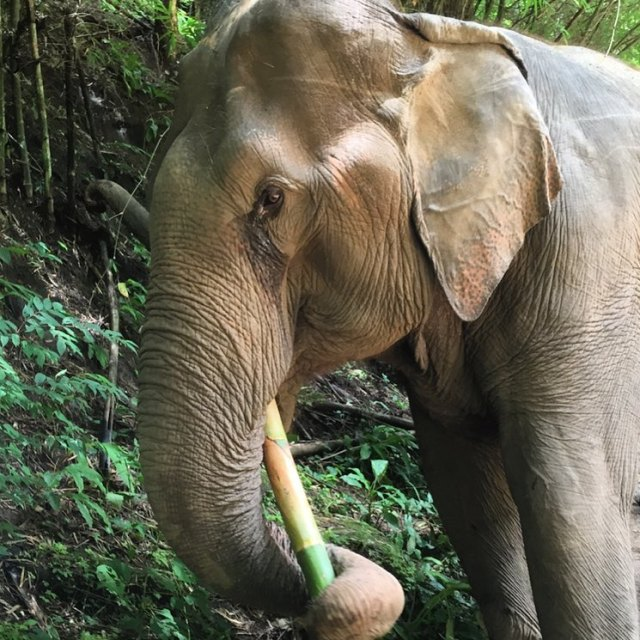 Flashback to our visit to Elephant Nature Park in Chainghellip