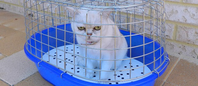 A cat taken away from a home showing